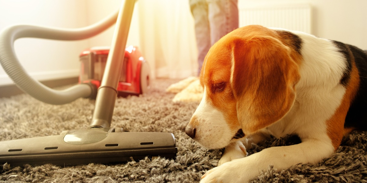 A vacuum for pet hair cleaning a carpet with a dog next to it