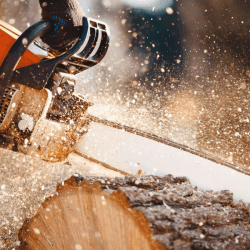 man cutting wood with chainsaw in the forrest