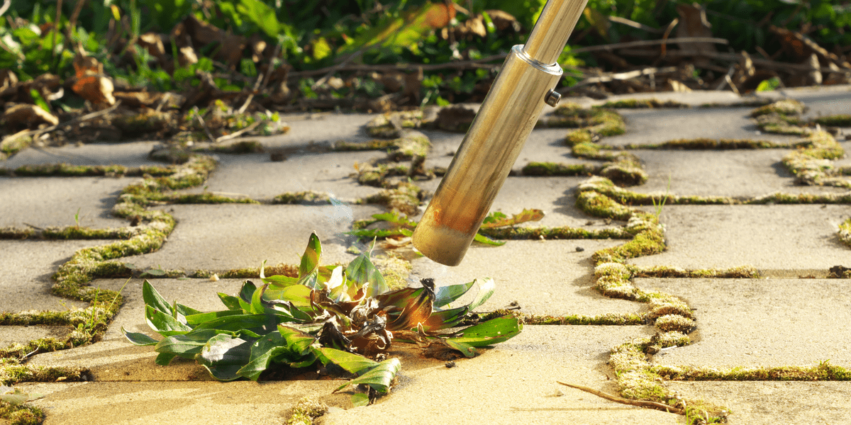 image of an electric weed burner killing weeds with high heat