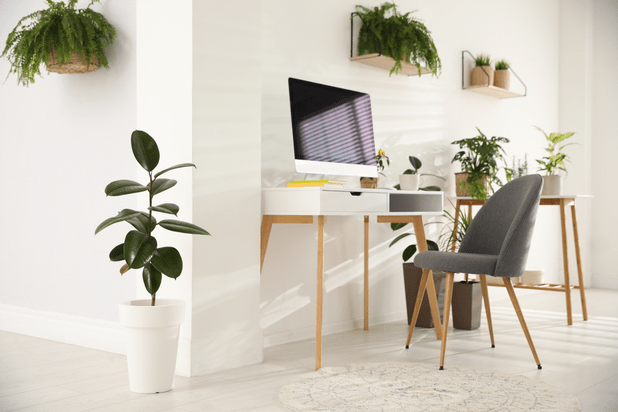 Home office decorated with plants