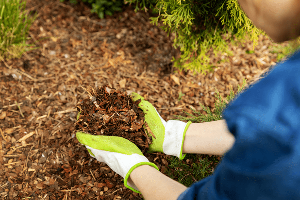 Woman holding wood chips