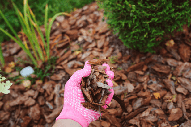 Woman wearing gloves and holding wood chips