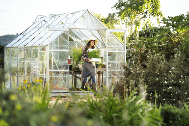 young woman working in her cold frame greenhouse